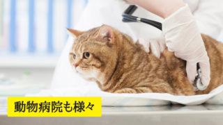 動物病院も様々