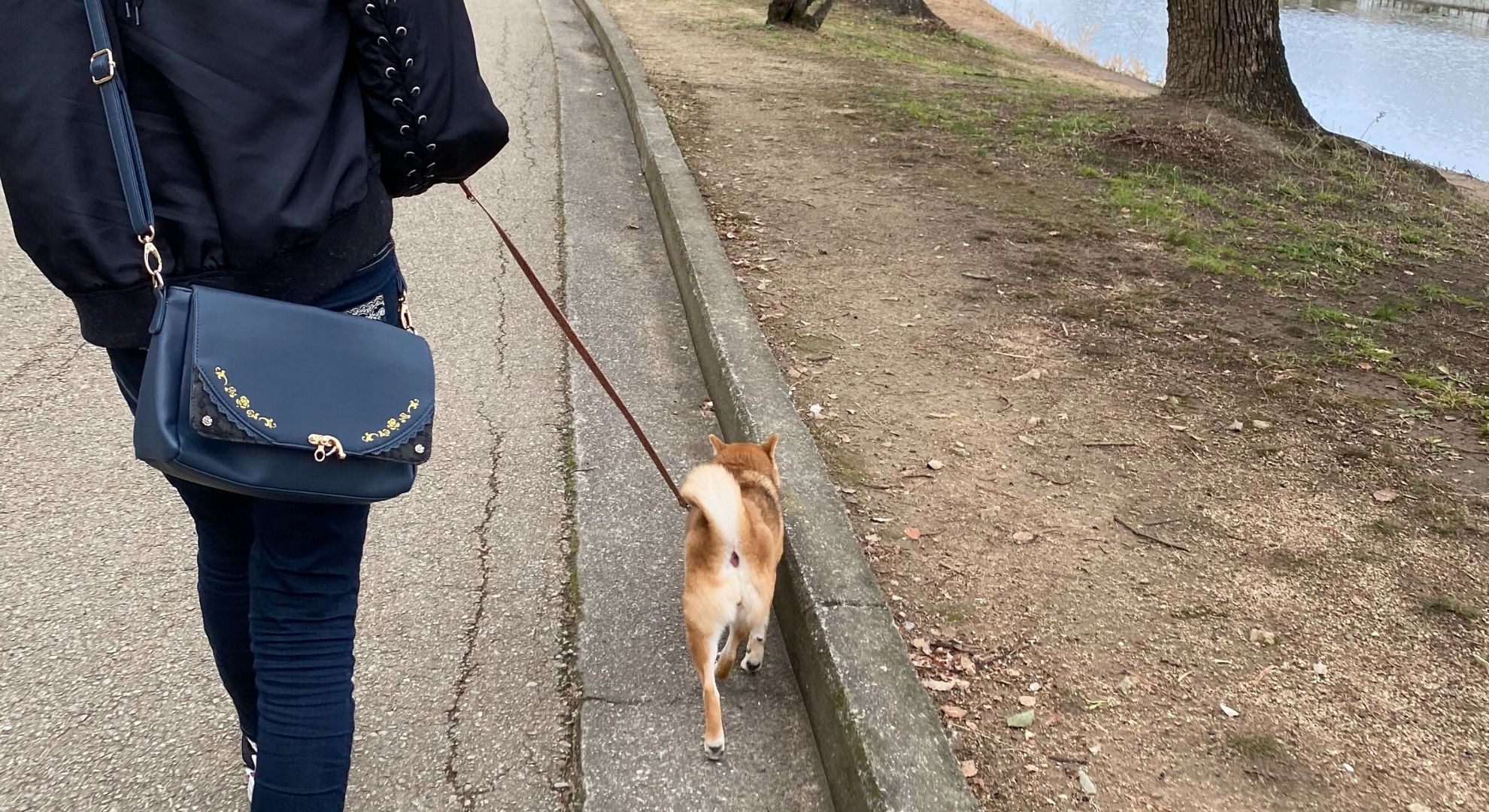 ご依頼~犬の散歩~