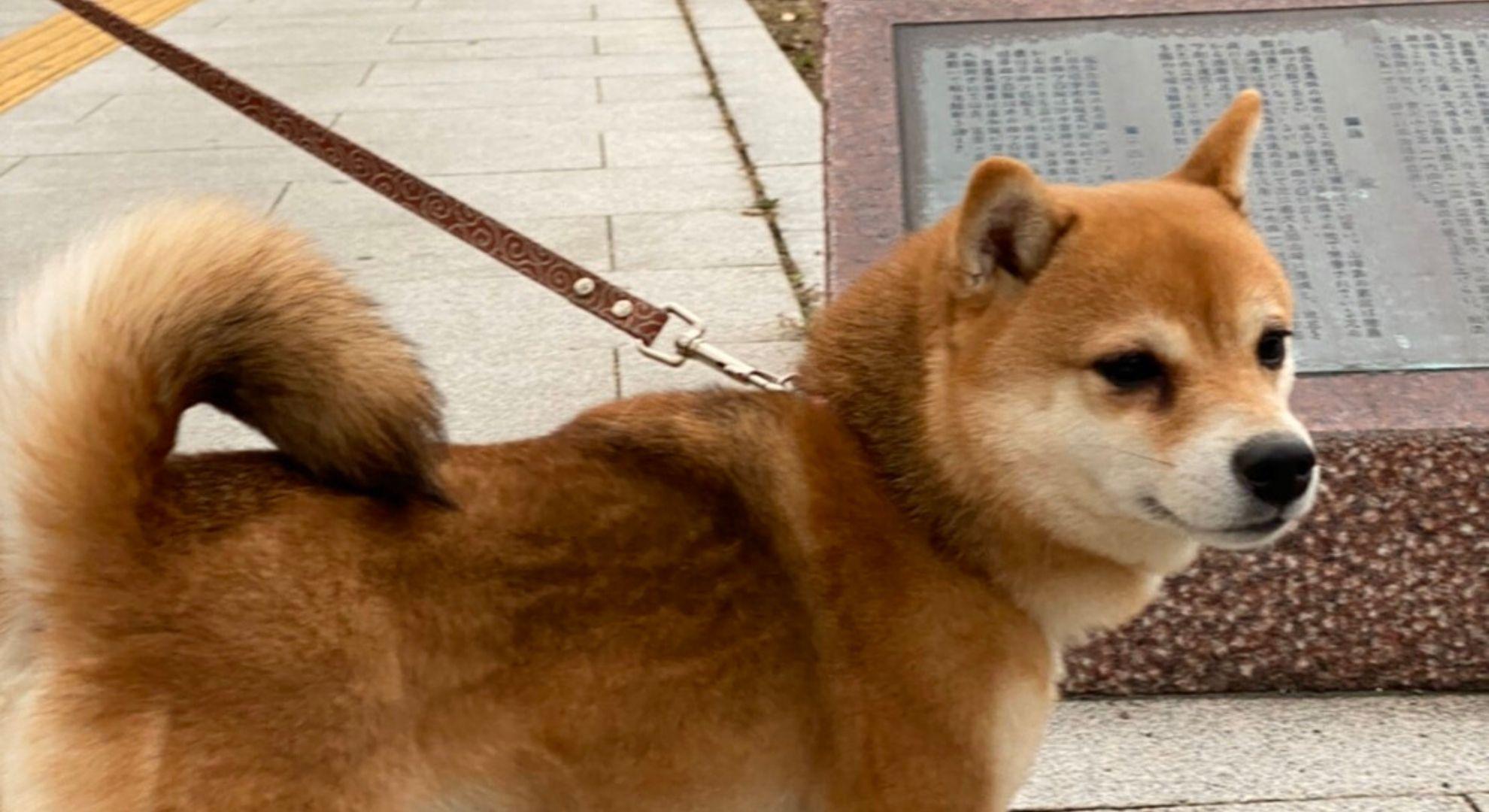 丸亀城でのお散歩